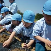 ジャガ芋植え体験